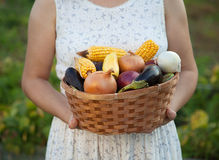 Woman gardener with basket of fresh vegetables. person holds har Stock Photos