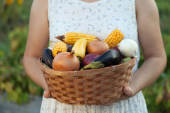 woman gardener with basket of fresh vegetables. person holds harvest from field. Organic shoot with natural garden stock images
