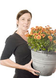 Woman gardener beautiful chrysanthemum mum flow Stock Photography