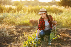 Woman gardener with beet Royalty Free Stock Images