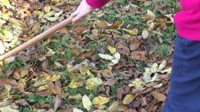 Woman gardener cleans the garden with a rake autumn stock video