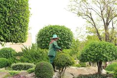 Woman gardener cutting leaves of tree Royalty Free Stock Images