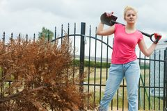 Woman digging hole in garden royalty free stock photo