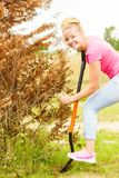 Woman remove tree from backyard, digging soil with shovel. Woman gardener digs ground soil with shovel for removal withered dried thuja tree from her backyard Stock Photography