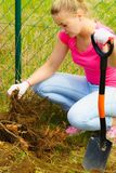 Woman remove tree from backyard, digging soil with shovel. Woman gardener digs ground soil with shovel for removal withered dried thuja tree from her backyard Stock Image
