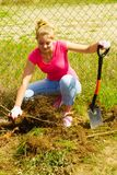 Woman remove tree from backyard, digging soil with shovel. Woman gardener digs ground soil with shovel for removal withered dried thuja tree from her backyard Royalty Free Stock Images