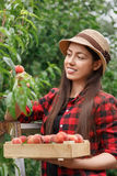 Woman gardener with peaches Stock Photos