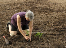 Woman gardener Royalty Free Stock Photo