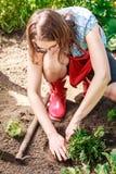 Woman gardener replanting flowers Stock Photo
