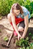 Woman gardener replanting flowers Royalty Free Stock Photo