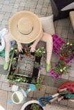 Woman gardener transplanting nursery seedlings Royalty Free Stock Photography