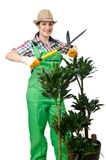 Woman gardener trimming plans Stock Photo