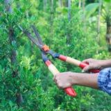 Woman gardener trimming plans Stock Photo