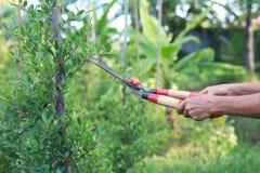 Woman gardener trimming plans Royalty Free Stock Image