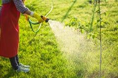 Woman gardener in uniform watering tree Stock Photo