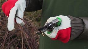 Woman gardener using scissors close up. Stock footage video stock footage