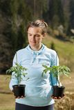 Woman gardener watching her tomato seedlings prepared to be planted on her garden. Organic gardening, healthy food, self-supply and housework concept royalty free stock photography