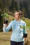 Woman gardener watching her tomato seedlings prepared to be planted on her garden stock image