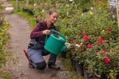 Woman gardener watering the flowers in the garden Stock Images