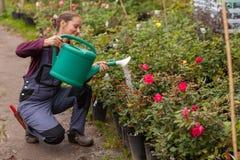 Woman gardener watering the flowers in the garden Stock Photo