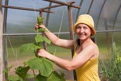 Woman Gardening Stock Image