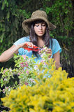 Woman gardening. Young woman gardening and caring for plants in summer Stock Image