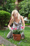 Woman Gardening Stock Photography