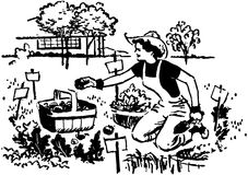 Woman Gardening Royalty Free Stock Photo