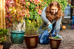 Woman gardening in the autumn Stock Photography