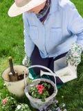 Woman gardening Royalty Free Stock Photos