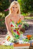 Woman Gardening Planting Flowers and Tomato Plants. Woman, beautiful blonde female, gardening planting flowers and tomato plants in the garden royalty free stock photos