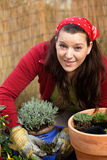 Woman gardening -putting lavender in a flower pot Royalty Free Stock Photos