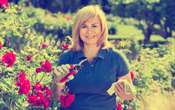 Woman gardening red roses and holding horticultural tools on sun. Smiling happy charming blond mature woman gardening red roses and holding horticultural tools Royalty Free Stock Photo