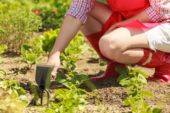Woman with gardening tool working in garden. Closeup woman with gardening tool working in her backyard garden outdoor Royalty Free Stock Photography