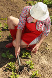 Woman with gardening tool working in garden Stock Image
