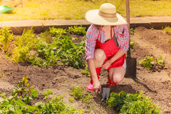 Woman with gardening tool working in garden Royalty Free Stock Image