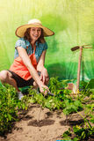 Woman with gardening tool working in greenhouse Royalty Free Stock Photography