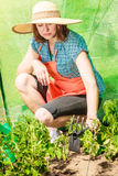 Woman with gardening tool working in greenhouse Royalty Free Stock Images