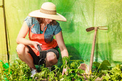 Woman with gardening tool working in greenhouse Stock Photography