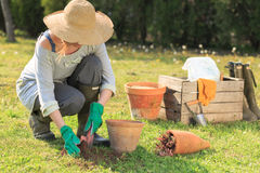 Woman gardening Stock Images