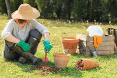 Woman gardening Stock Photos