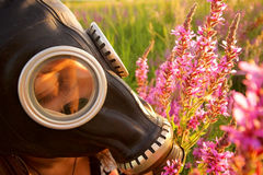 Woman with gas mask looking flowers Royalty Free Stock Photos