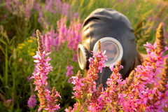 Woman with gas mask looking flowers Stock Images