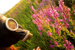 Woman with gas mask looking flowers Stock Photo