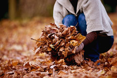 A woman gathering leaves in autumn time, close up Stock Image