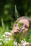 Woman gathering leaves and flowers of willow-herb (Ivan-tea) Stock Photos