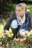 Woman gathering wild mushrooms Royalty Free Stock Image