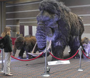 A Woman Gazes at a Woolly Mammoth Family Stock Photo