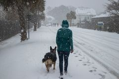 Woman and dog walking in the snow stock images
