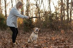 Woman gets ready to throw a stick for a dog. Stock Photo